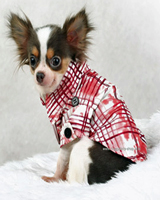 Chemise for dogs