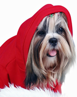 Pullover with hood from Doggydol