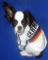 Football shirts for dogs