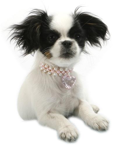 Doggydolly Hundemode, Lilly